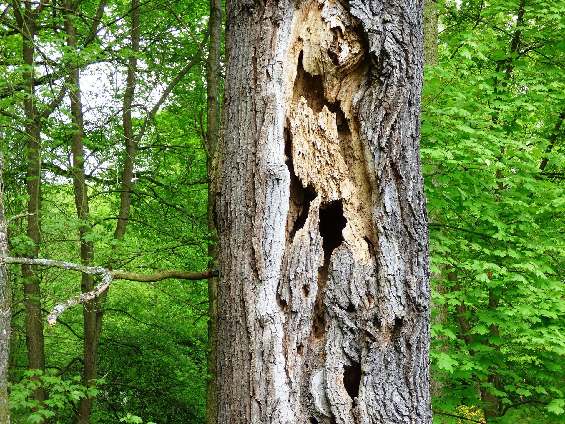 arbre détruit en forêt